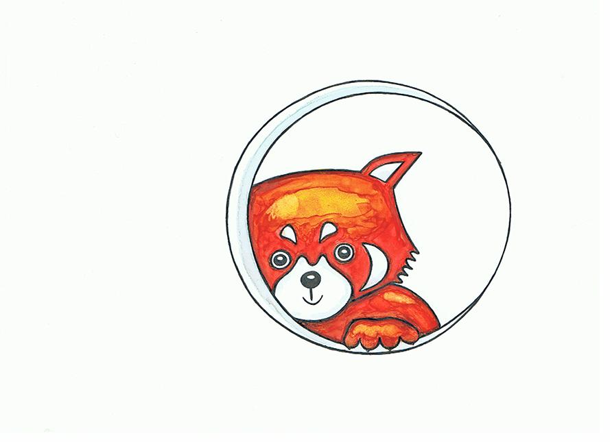Zeichnung Roter Panda