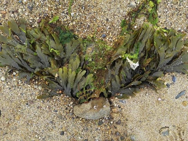 Sea Creature 15