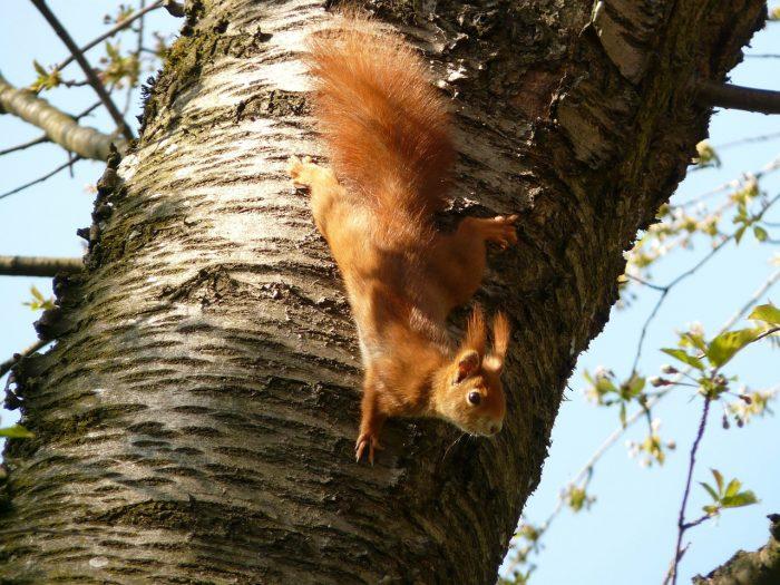 Bild/Eichhörnchen