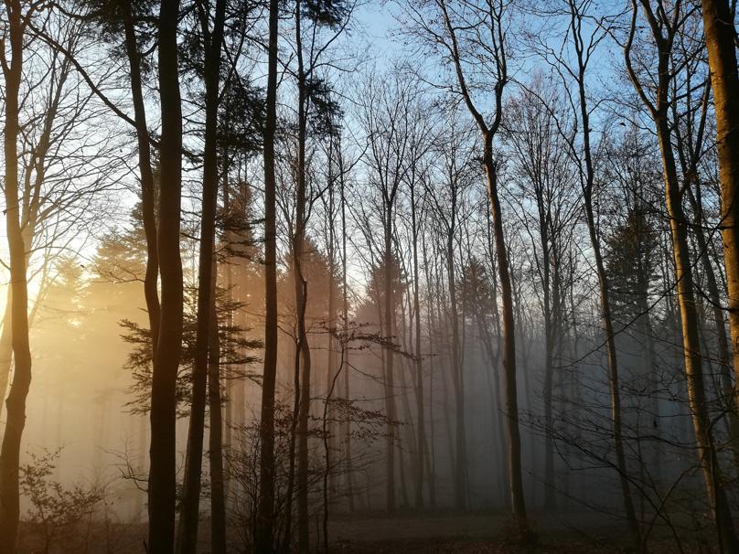 Nebel lichtet sich