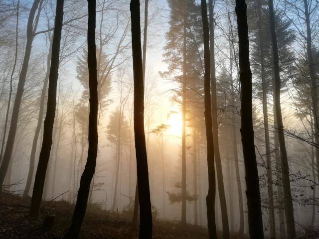 Sonne durch den Nebel
