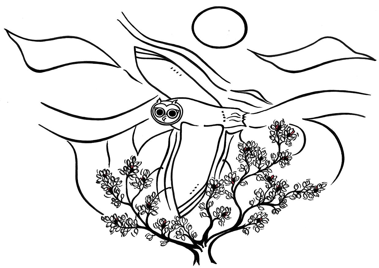Drawing Owl