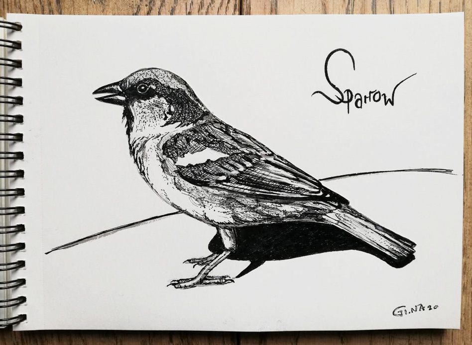 Ink Drawing Sparrow